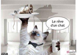 chat-et-sa-souris-69310